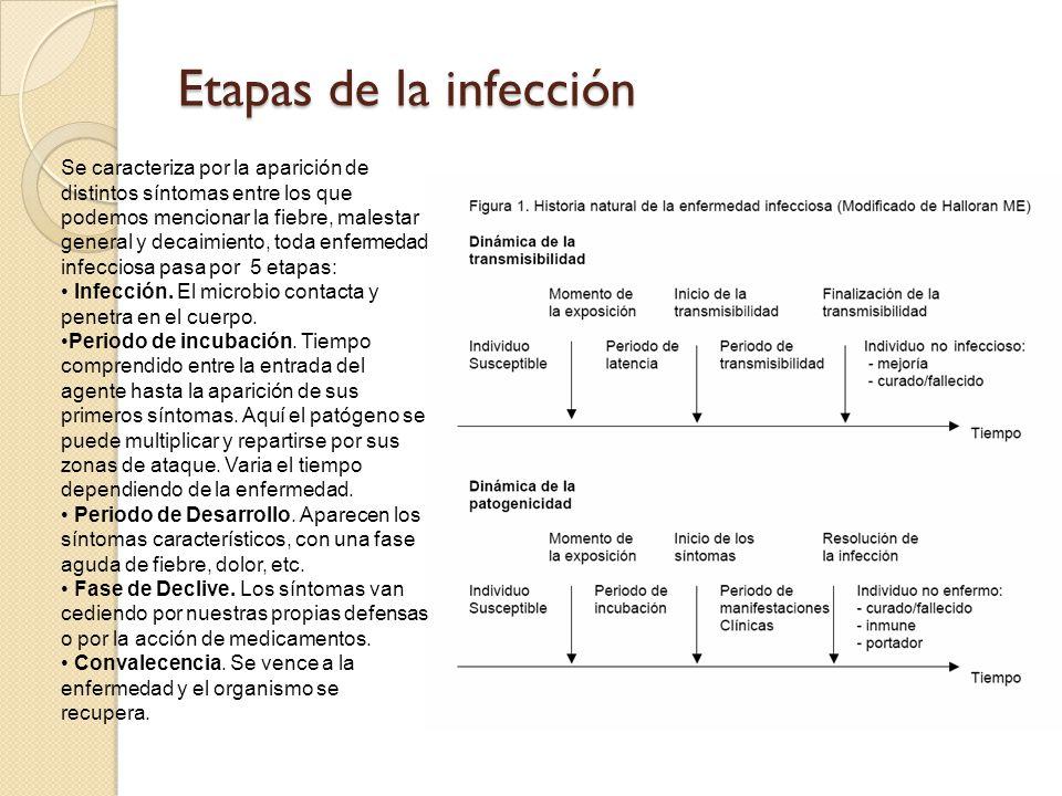 Etapas de la infección