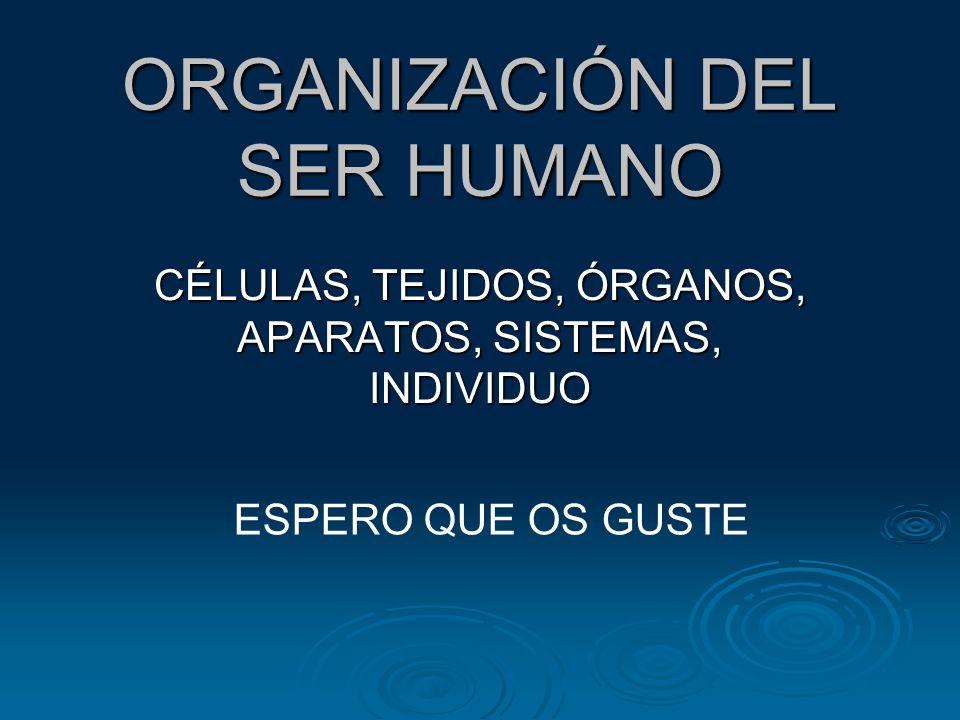 ORGANIZACIÓN DEL SER HUMANO