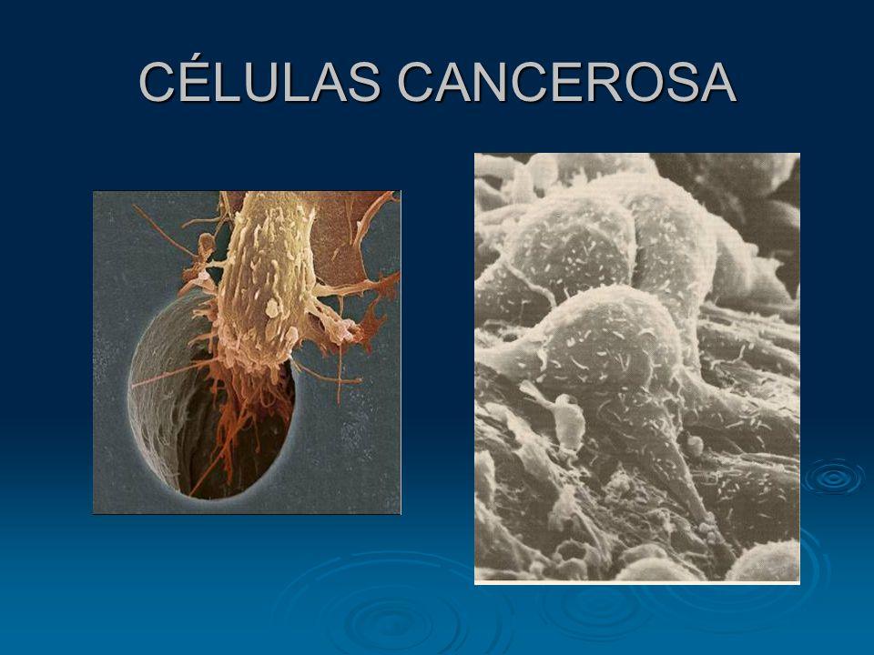 CÉLULAS CANCEROSA