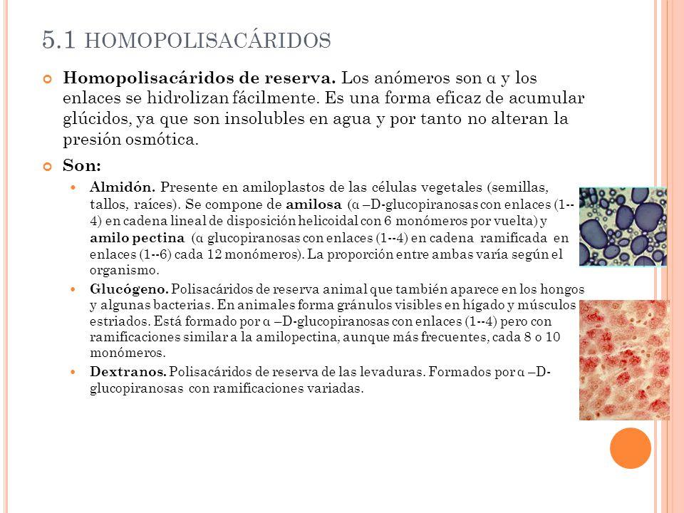 5.1 homopolisacáridos