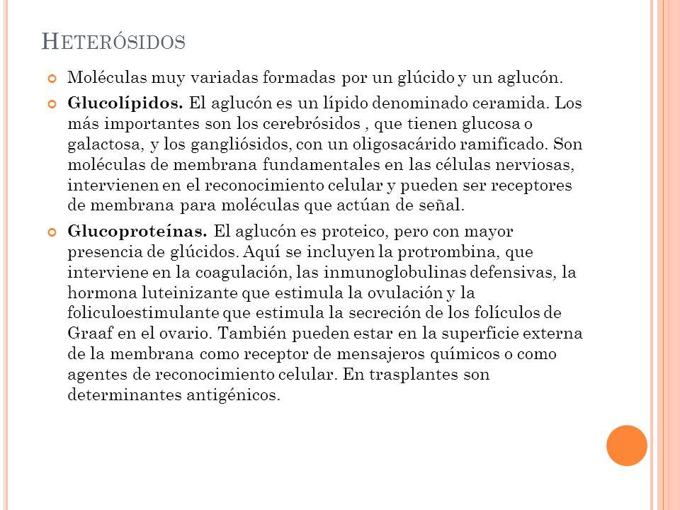 Heterósidos Moléculas muy variadas formadas por un glúcido y un aglucón.