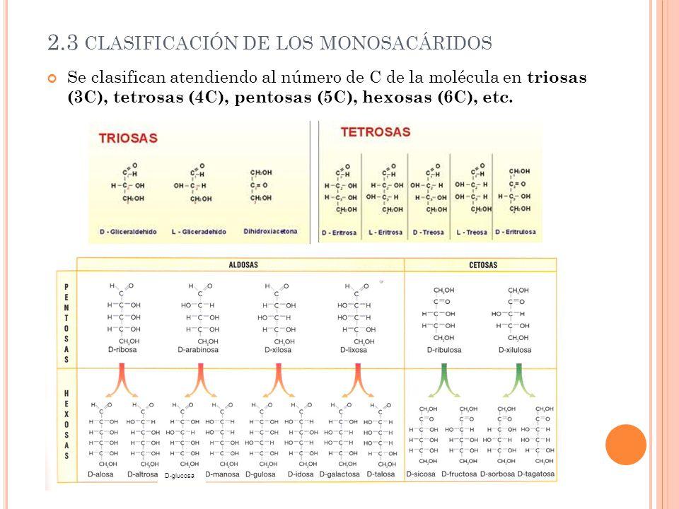 2.3 clasificación de los monosacáridos