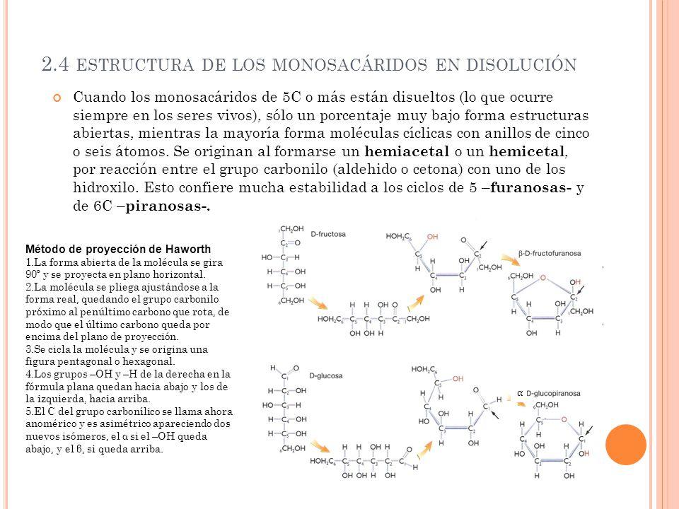 2.4 estructura de los monosacáridos en disolución