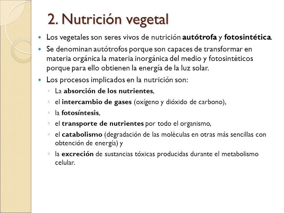 2. Nutrición vegetal Los vegetales son seres vivos de nutrición autótrofa y fotosintética.
