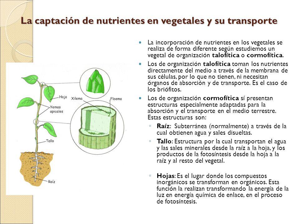 La captación de nutrientes en vegetales y su transporte