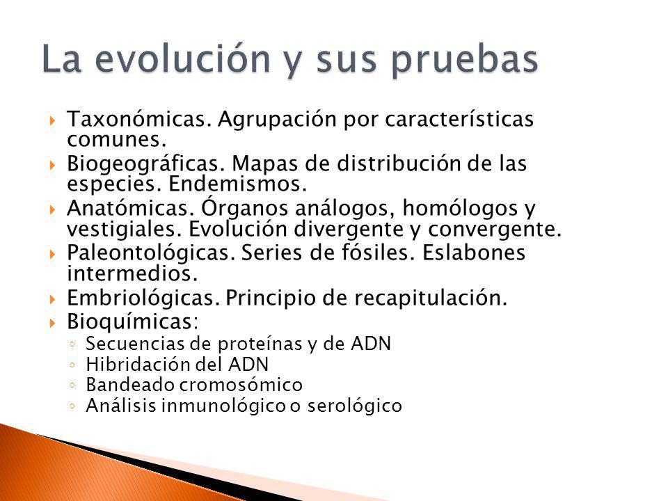 La evolución y sus pruebas