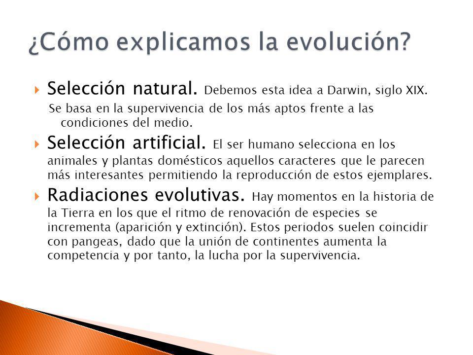 ¿Cómo explicamos la evolución