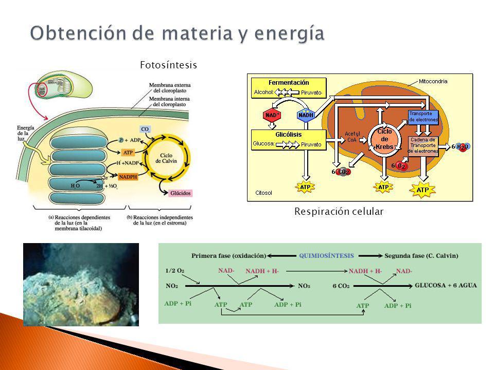 Obtención de materia y energía