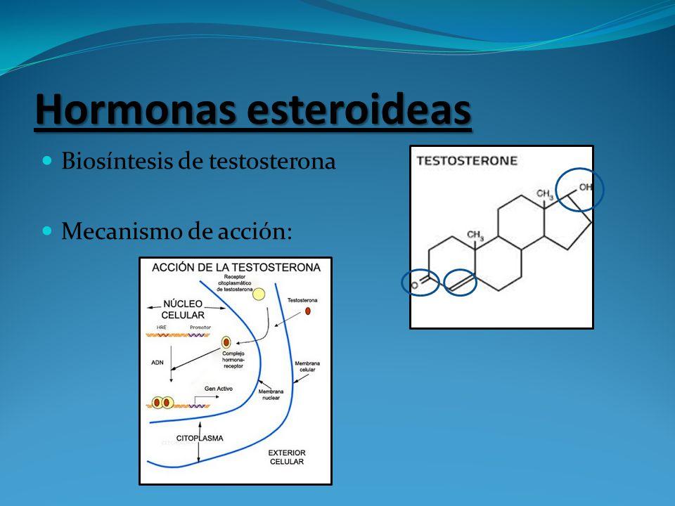 Hormonas esteroideas Biosíntesis de testosterona Mecanismo de acción: