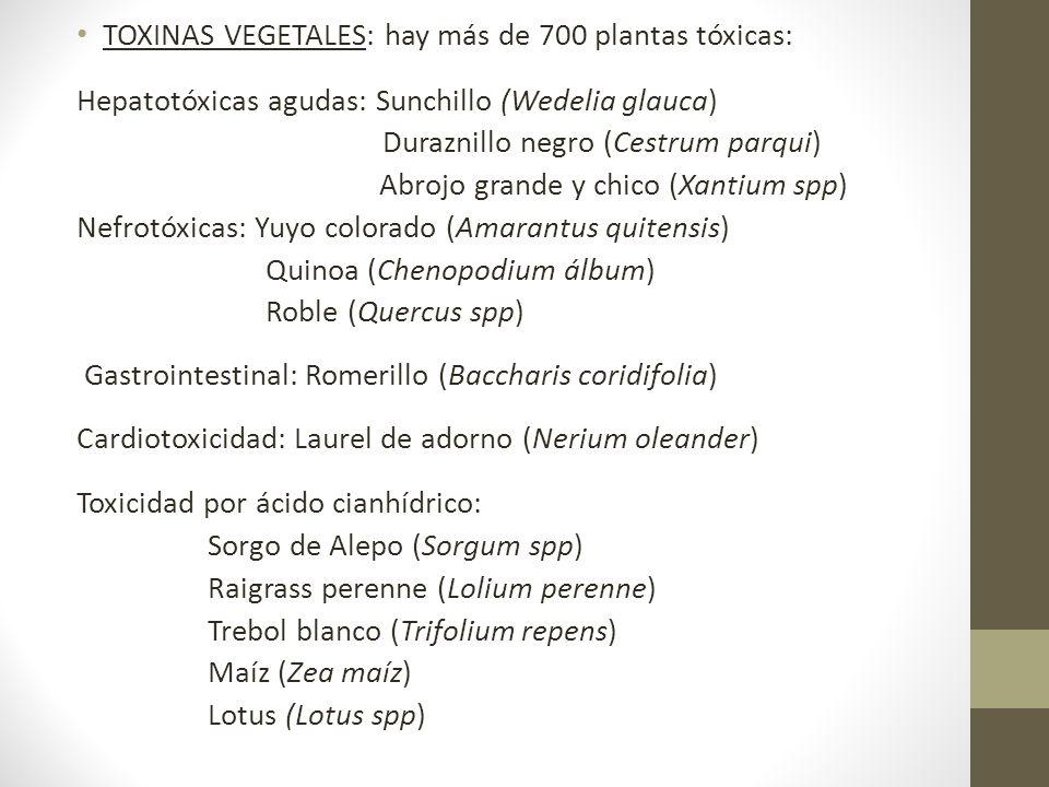 TOXINAS VEGETALES: hay más de 700 plantas tóxicas: