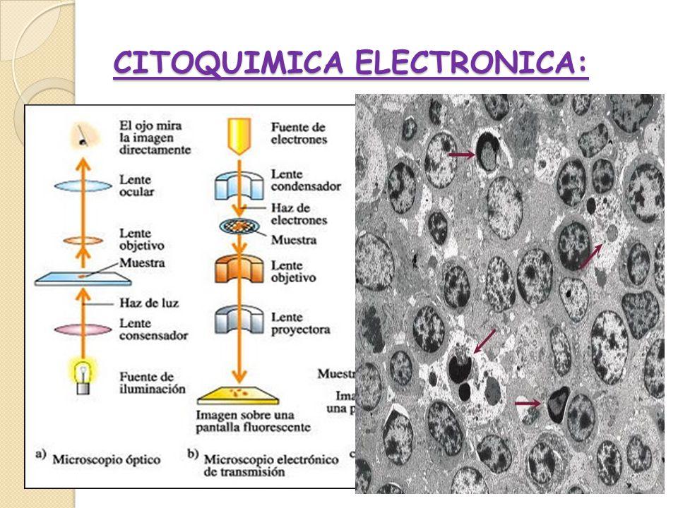 CITOQUIMICA ELECTRONICA: