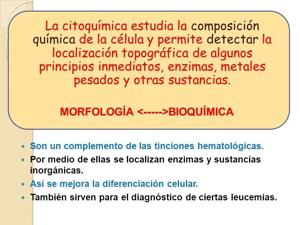 MORFOLOGÍA <----->BIOQUÍMICA