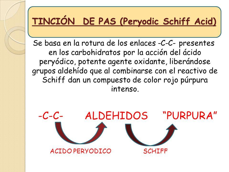 TINCIÓN DE PAS (Peryodic Schiff Acid)