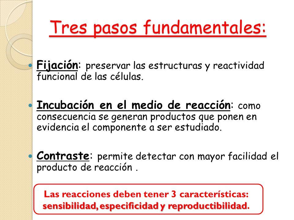 Tres pasos fundamentales: