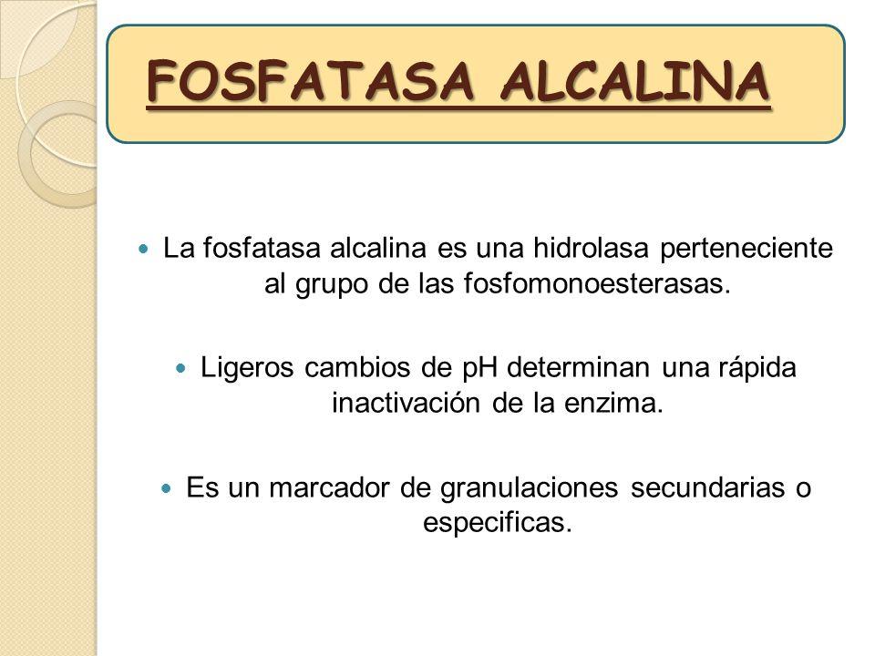FOSFATASA ALCALINA La fosfatasa alcalina es una hidrolasa perteneciente al grupo de las fosfomonoesterasas.