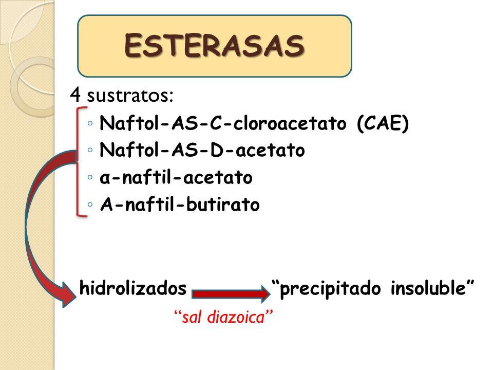ESTERASAS 4 sustratos: hidrolizados precipitado insoluble