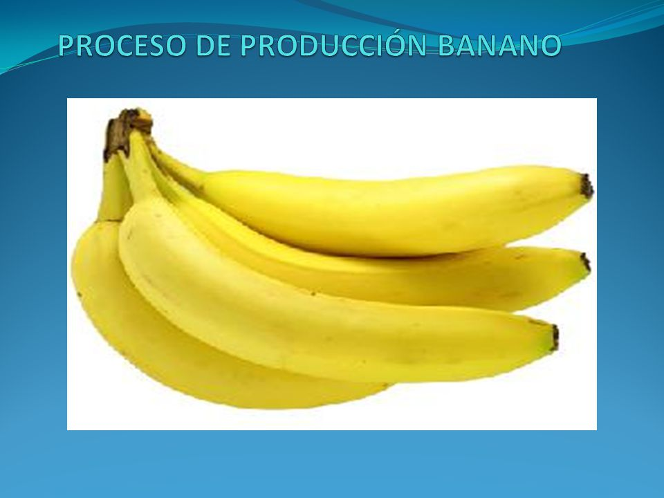 PROCESO DE PRODUCCIÓN BANANO