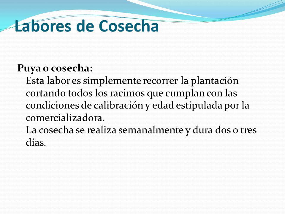Labores de Cosecha