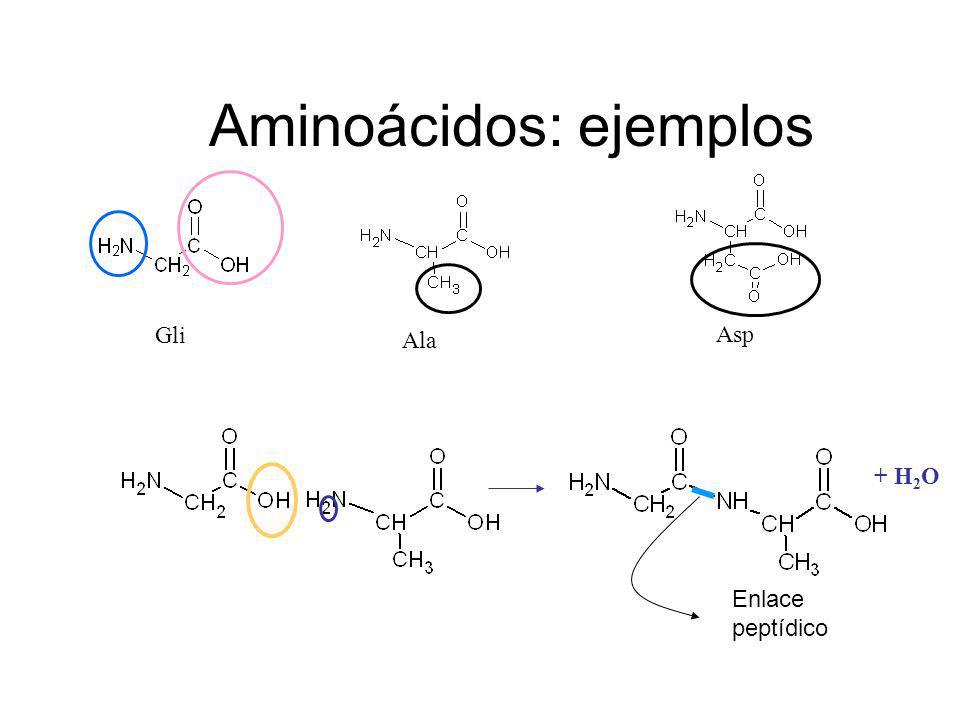 Aminoácidos: ejemplos