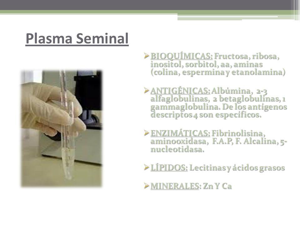 Plasma Seminal BIOQUÍMICAS: Fructosa, ribosa, inositol, sorbitol, aa, aminas (colina, espermina y etanolamina)