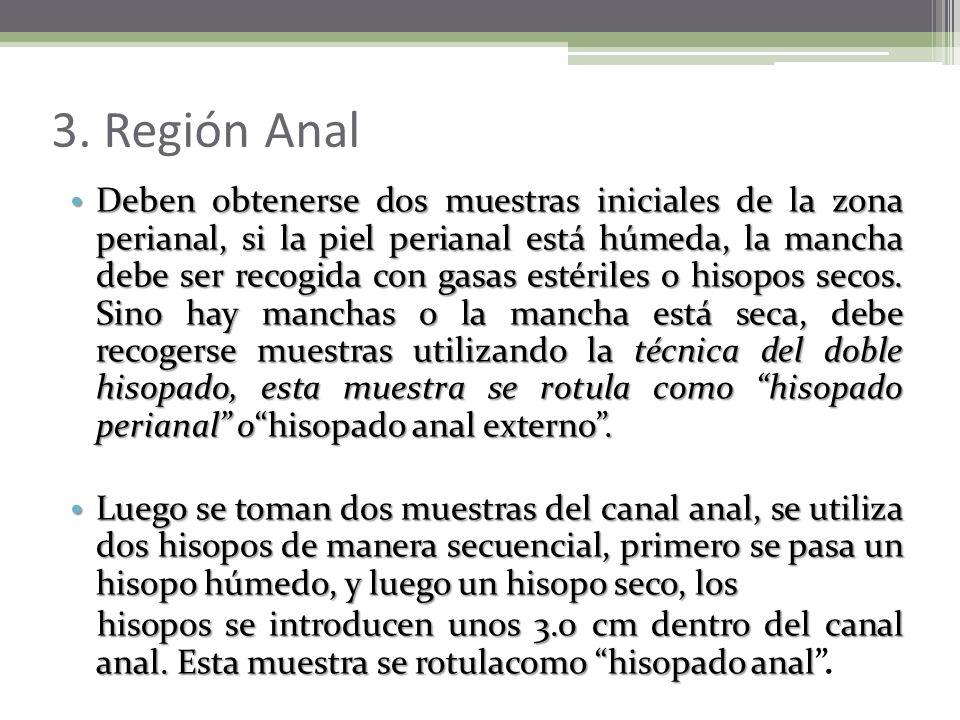 3. Región Anal