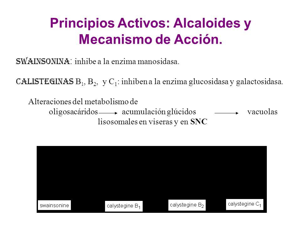Principios Activos: Alcaloides y Mecanismo de Acción.