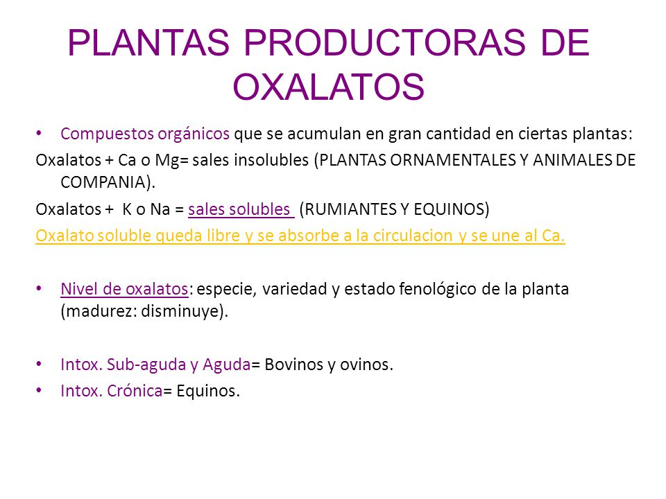 PLANTAS PRODUCTORAS DE OXALATOS