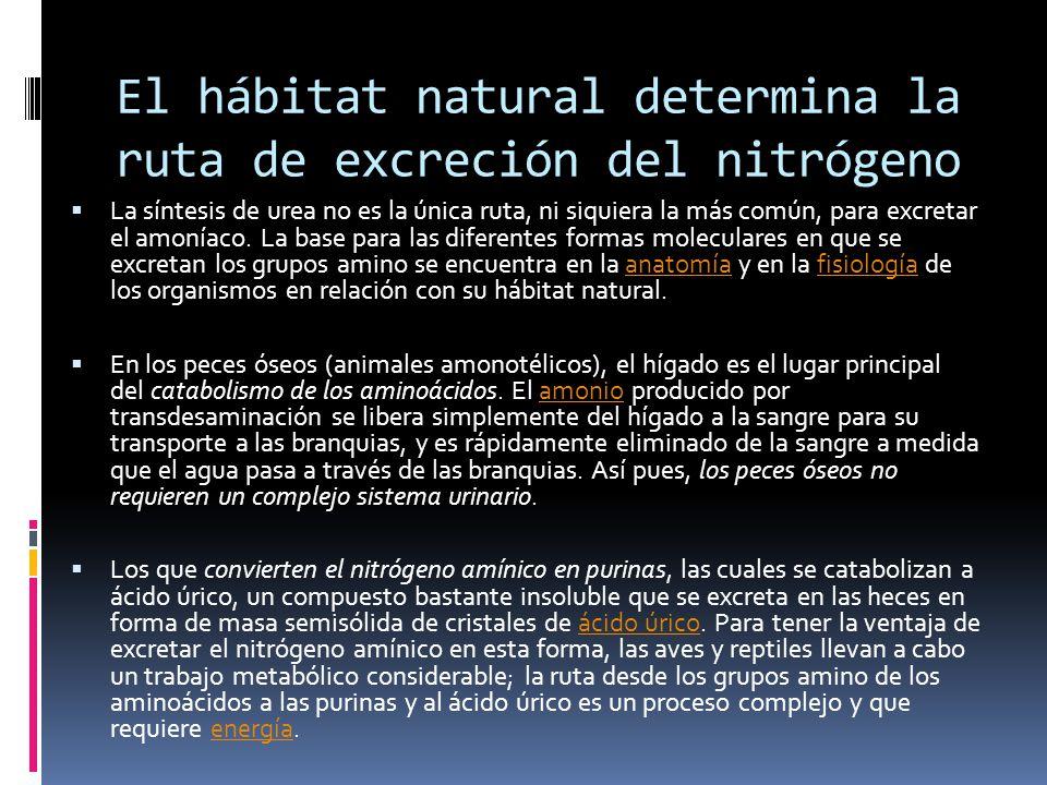 El hábitat natural determina la ruta de excreción del nitrógeno
