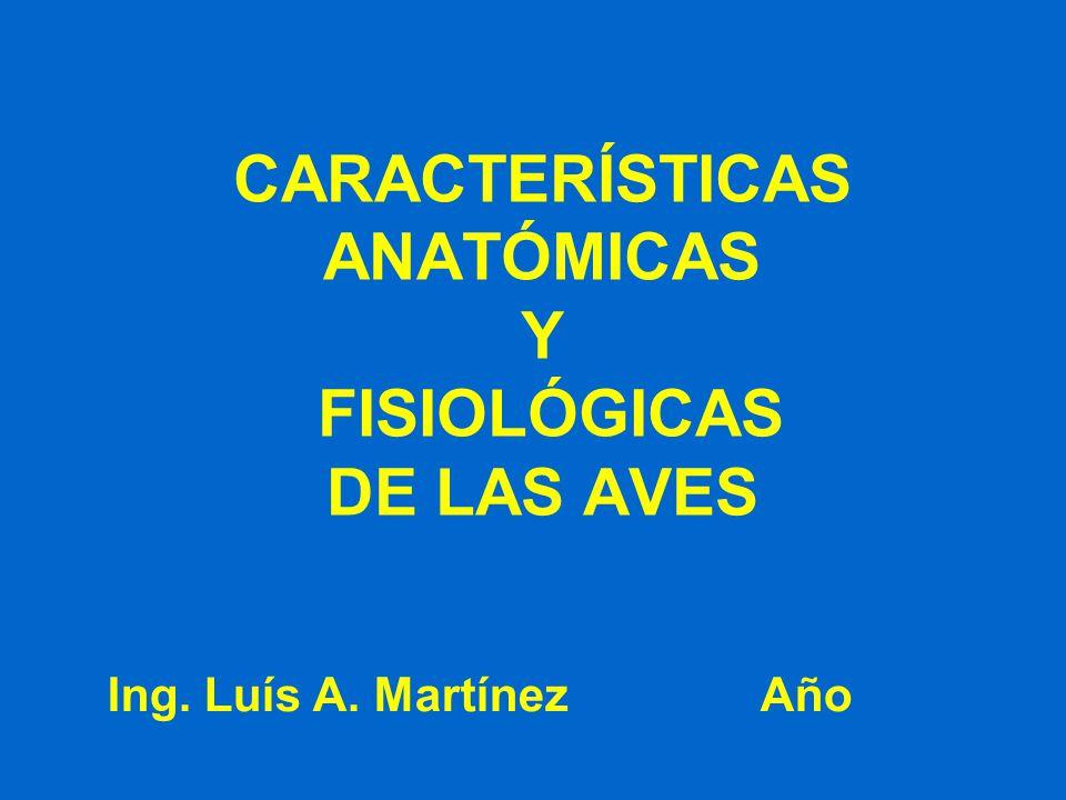 CARACTERÍSTICAS ANATÓMICAS Y FISIOLÓGICAS DE LAS AVES - ppt video ...