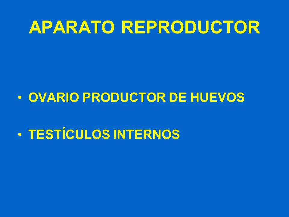 APARATO REPRODUCTOR OVARIO PRODUCTOR DE HUEVOS TESTÍCULOS INTERNOS