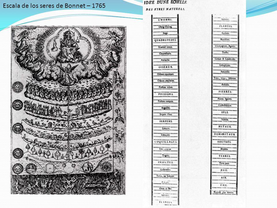 Escala de los seres de Bonnet – 1765