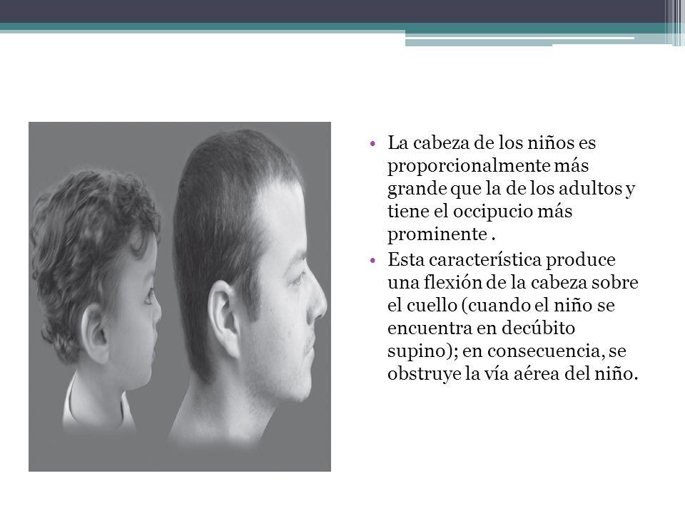 La cabeza de los niños es proporcionalmente más grande que la de los adultos y tiene el occipucio más prominente .