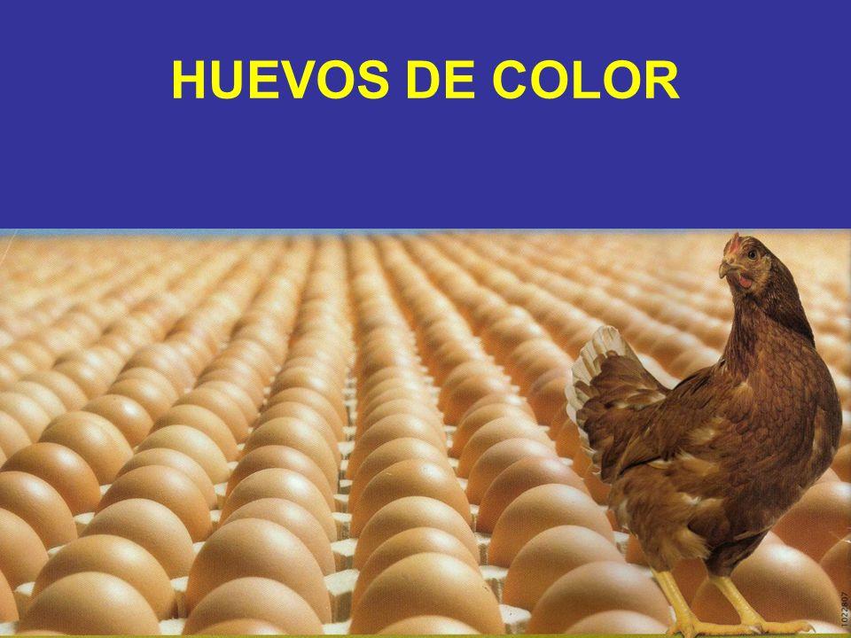 HUEVOS DE COLOR