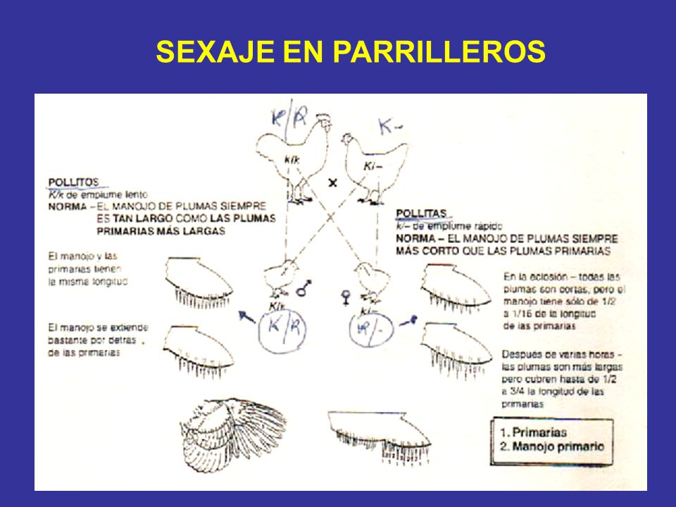 SEXAJE EN PARRILLEROS