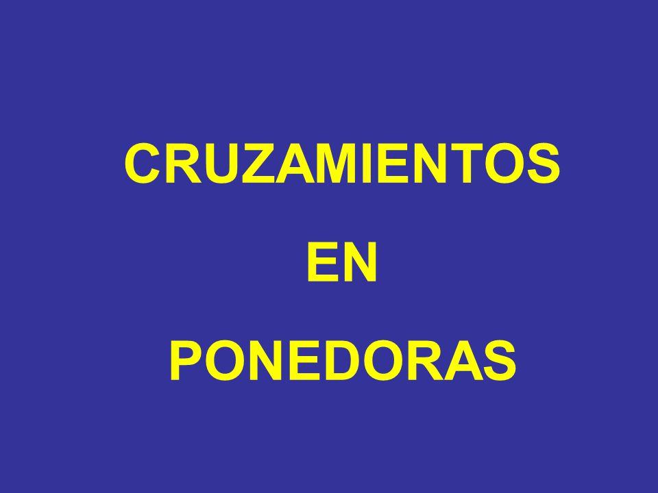 CRUZAMIENTOS EN PONEDORAS