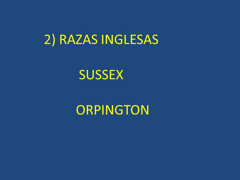 2) RAZAS INGLESAS SUSSEX ORPINGTON