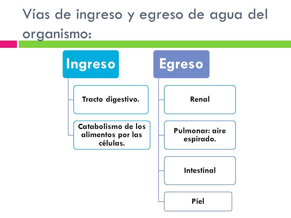 Vías de ingreso y egreso de agua del organismo: