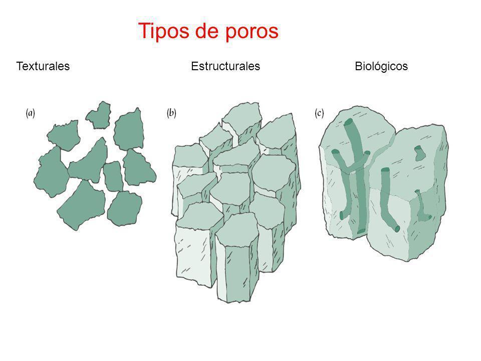 Tipos de poros Texturales Estructurales Biológicos.