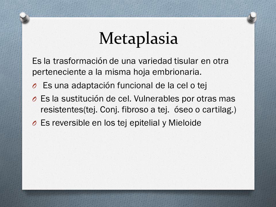 Metaplasia Es la trasformación de una variedad tisular en otra perteneciente a la misma hoja embrionaria.