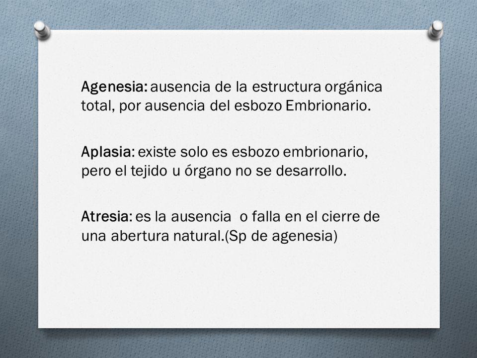 Agenesia: ausencia de la estructura orgánica total, por ausencia del esbozo Embrionario.