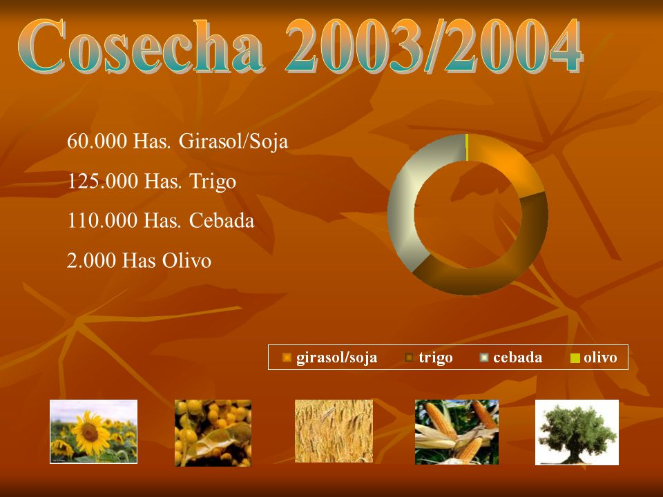 Cosecha 2003/2004 60.000 Has. Girasol/Soja 125.000 Has. Trigo