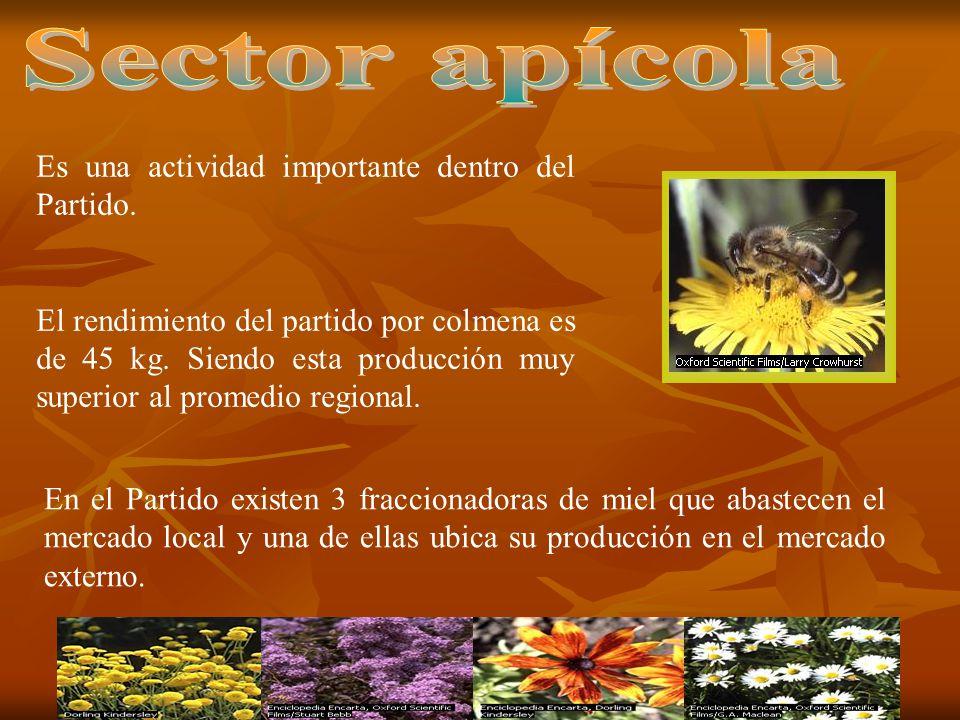 Sector apícola Es una actividad importante dentro del Partido.