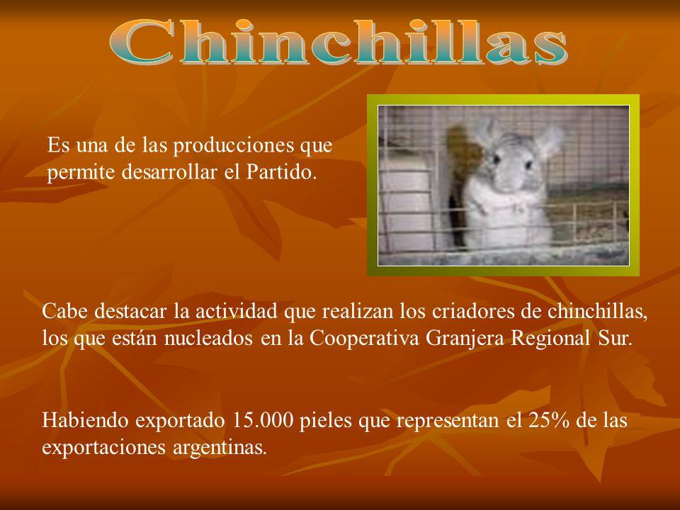 Chinchillas Es una de las producciones que permite desarrollar el Partido.
