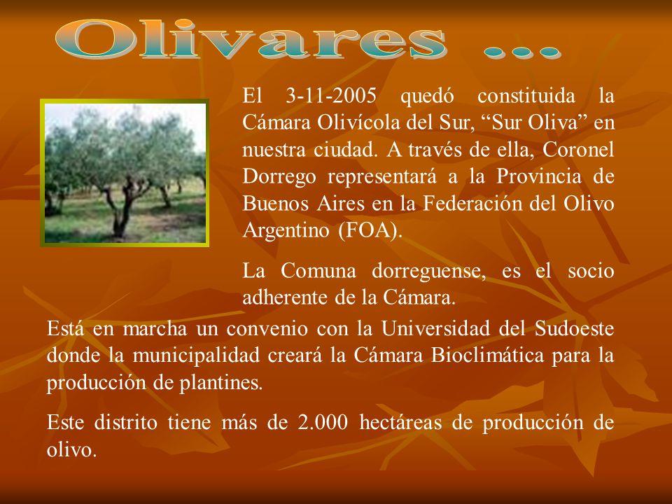 Olivares ...