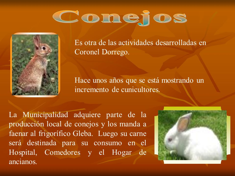 Conejos Es otra de las actividades desarrolladas en Coronel Dorrego.
