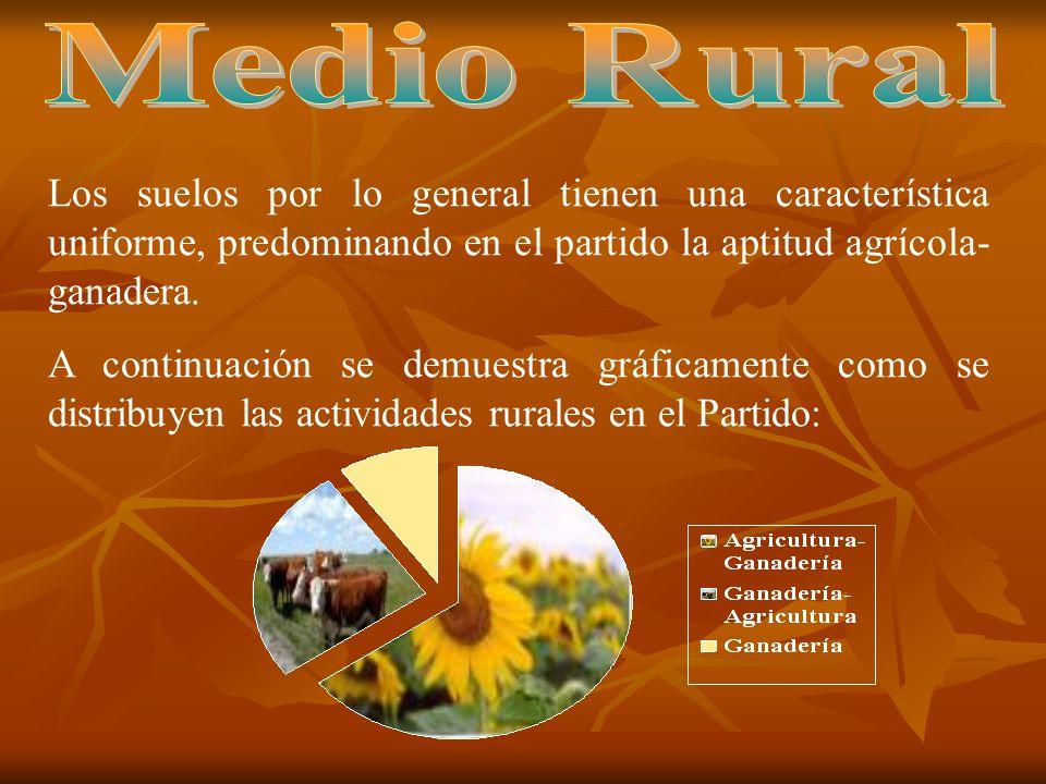 Medio Rural Los suelos por lo general tienen una característica uniforme, predominando en el partido la aptitud agrícola-ganadera.