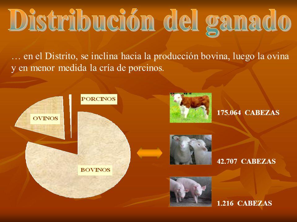 Distribución del ganado