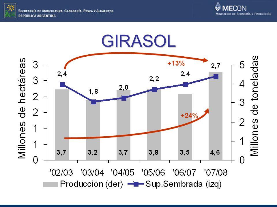 GIRASOL +13% +24%