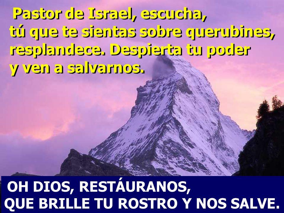Pastor de Israel, escucha, tú que te sientas sobre querubines, resplandece. Despierta tu poder y ven a salvarnos.