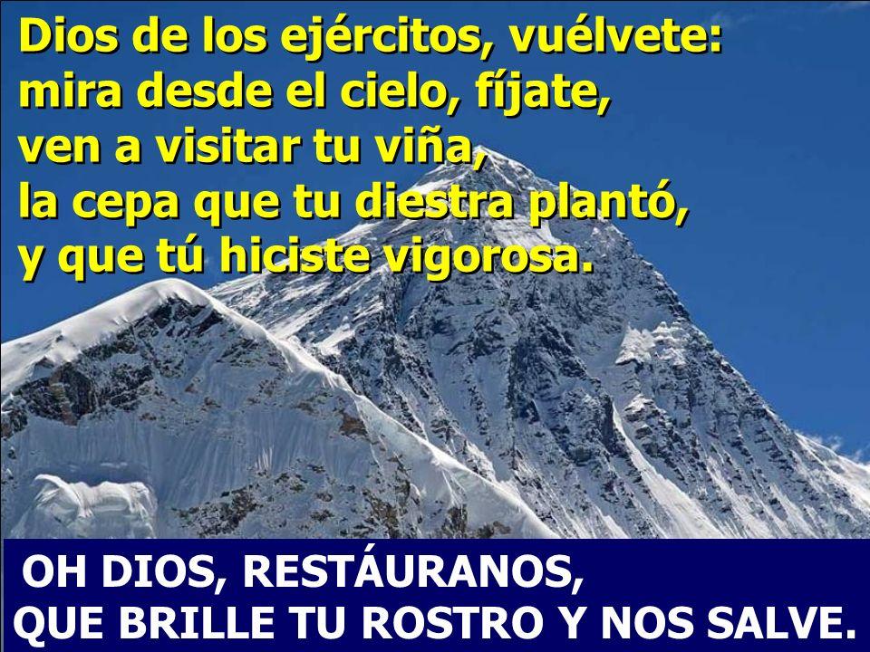 Dios de los ejércitos, vuélvete: mira desde el cielo, fíjate, ven a visitar tu viña, la cepa que tu diestra plantó, y que tú hiciste vigorosa.